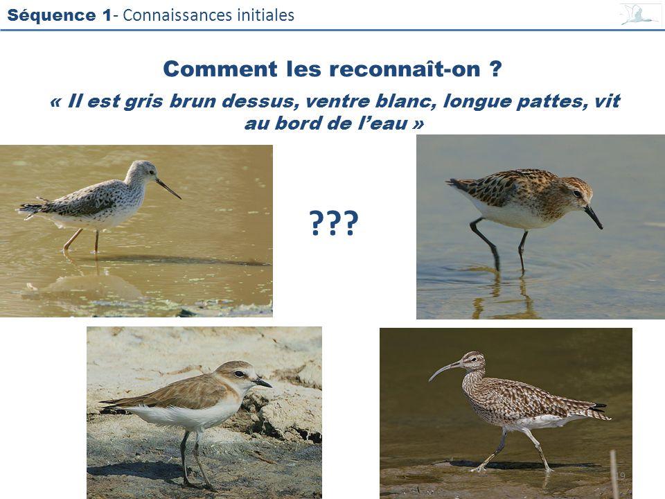 Séquence 1 - Connaissances initiales « Il est gris brun dessus, ventre blanc, longue pattes, vit au bord de leau » ??? Comment les reconnaît-on ? 19