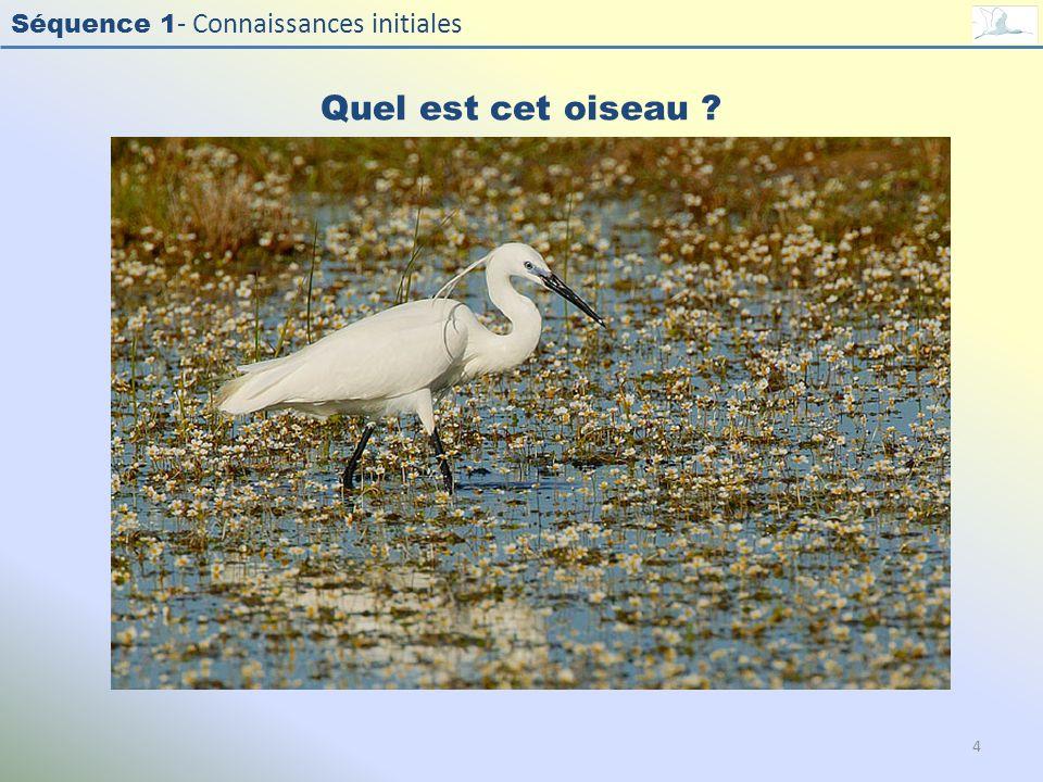 Séquence 1 - Connaissances initiales Quel est cet oiseau ? 4