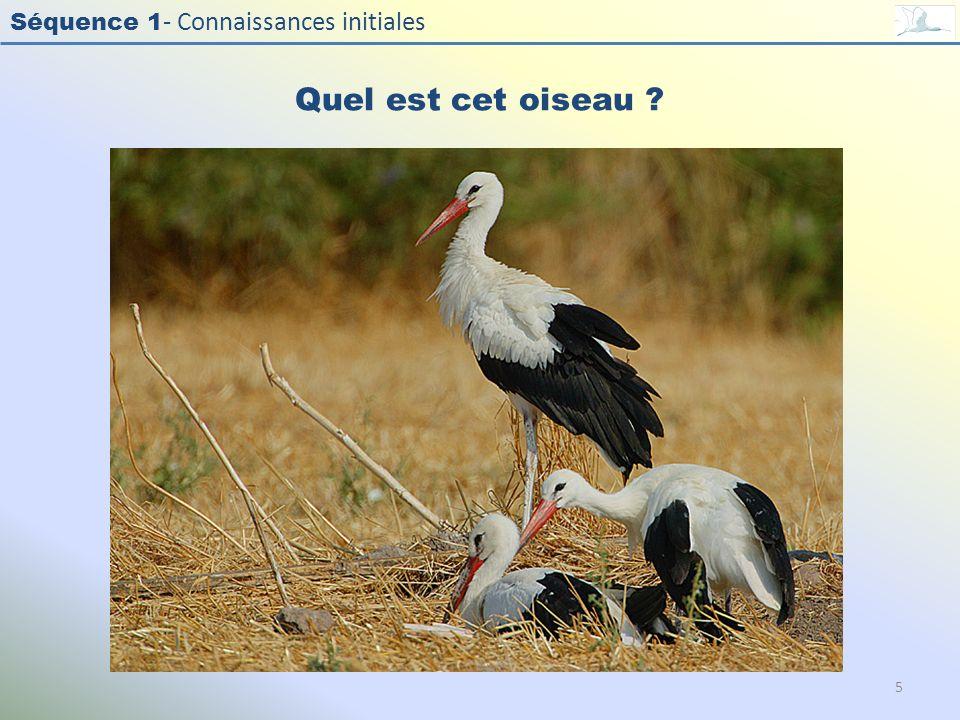 Séquence 1 - Connaissances initiales Quel est cet oiseau ? 5