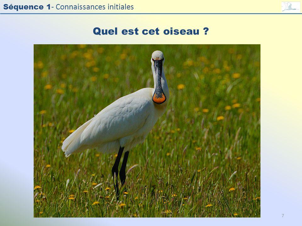 Séquence 1 - Connaissances initiales Quel est cet oiseau ? 7