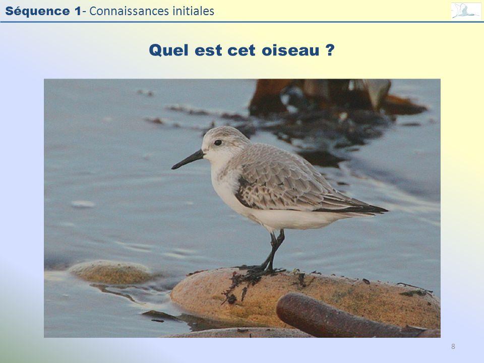 Séquence 1 - Connaissances initiales Quel est cet oiseau ? 8
