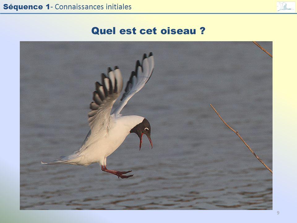 Séquence 1 - Connaissances initiales Quel est cet oiseau ? 9