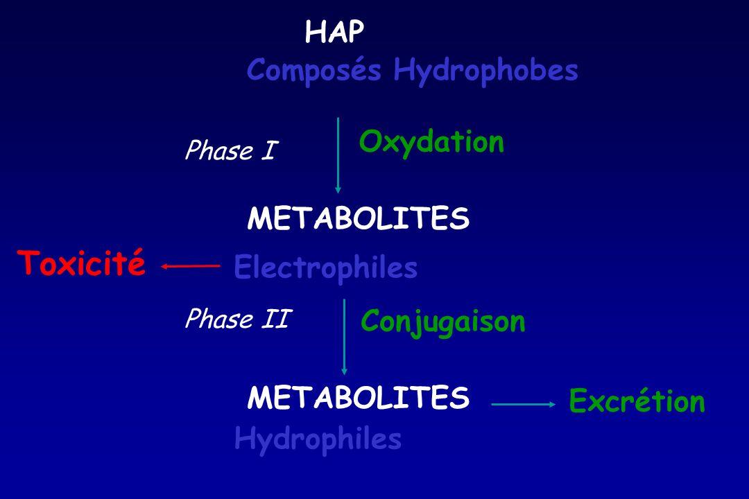 Electrophiles Oxydation Conjugaison HAP Composés Hydrophobes METABOLITES Hydrophiles Phase I Phase II Excrétion Toxicité
