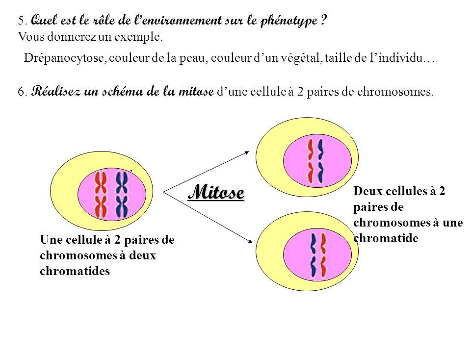 5. Quel est le rôle de lenvironnement sur le phénotype ? Vous donnerez un exemple. Drépanocytose, couleur de la peau, couleur dun végétal, taille de l