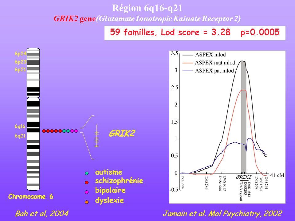 Région 6q16-q21 GRIK2 gene(Glutamate Ionotropic Kainate Receptor 2) Chromosome 6 6p24 6p23 6p21 6q21 6q16 GRIK2 schizophrénie autisme bipolaire dyslex