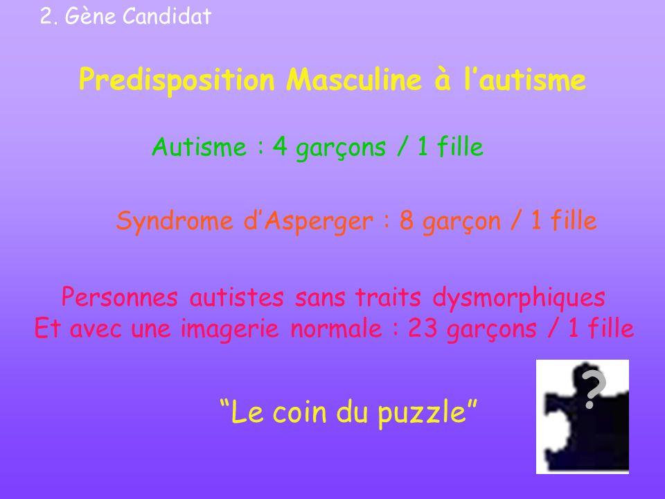 Predisposition Masculine à lautisme Le coin du puzzle Syndrome dAsperger : 8 garçon / 1 fille Autisme : 4 garçons / 1 fille Personnes autistes sans tr