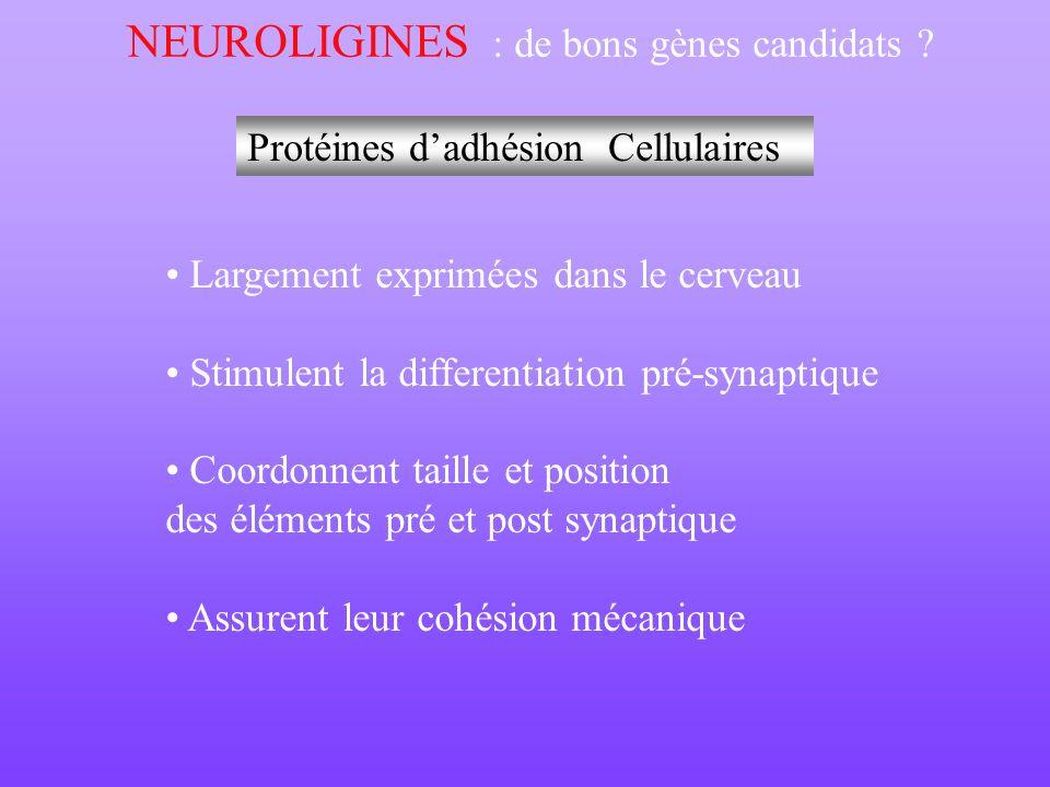 NEUROLIGINES : de bons gènes candidats ? Protéines dadhésion Cellulaires Largement exprimées dans le cerveau Stimulent la differentiation pré-synaptiq
