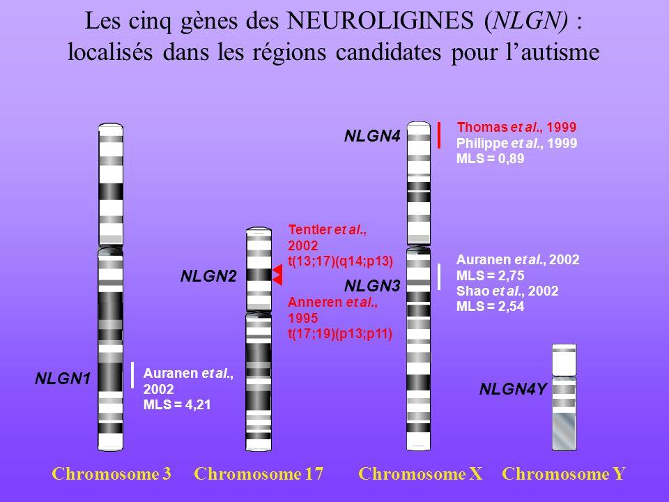 Les cinq gènes des NEUROLIGINES (NLGN) : localisés dans les régions candidates pour lautisme Chromosome 3Chromosome 17Chromosome XChromosome Y Thomas