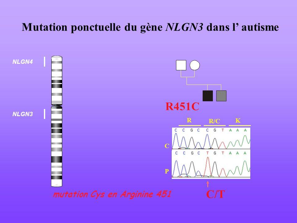Mutation ponctuelle du gène NLGN3 dans l autisme C P R R/C K R451C C/T mutation Cys en Arginine 451 NLGN4 NLGN3
