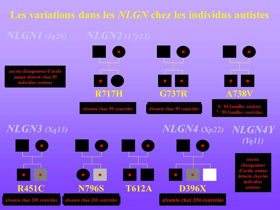 R451CN796SD396XT612A Les variations dans les NLGN chez les individus autistes NLGN1 (3q26) NLGN3 (Xq13) NLGN4 (Xp22) R717H absente chez 90 contrôles G