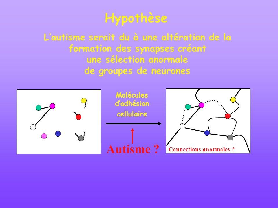 Hypothèse Lautisme serait du à une altération de la formation des synapses créant une sélection anormale de groupes de neurones Autisme ? Molécules da