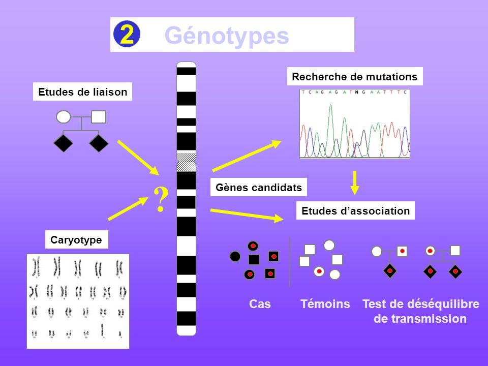 Génotypes Etudes de liaison Caryotype ? Recherche de mutations Etudes dassociation Test de déséquilibre de transmission Cas Témoins Gènes candidats 2