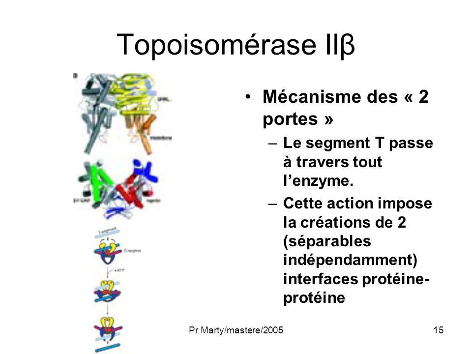 Pr Marty/mastere/200515 Topoisomérase IIβ Mécanisme des « 2 portes » –Le segment T passe à travers tout lenzyme. –Cette action impose la créations de