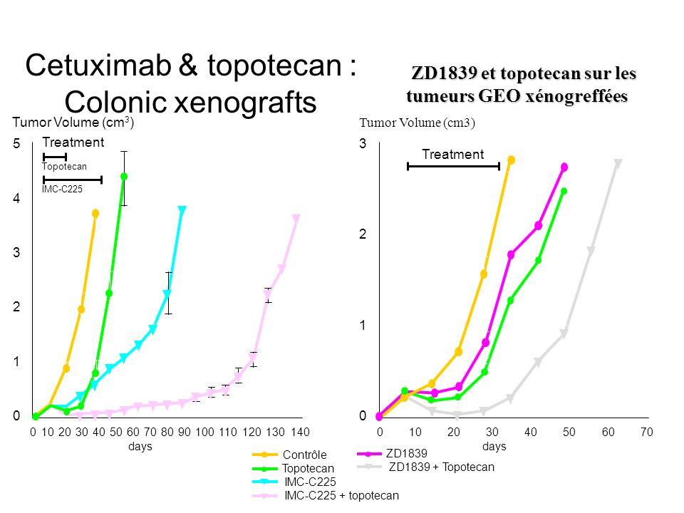 0102030405060708090100120130140 days 5 Tumor Volume (cm 3 ) Contrôle Topotecan IMC-C225 + topotecan IMC-C225 Cetuximab & topotecan : Colonic xenograft