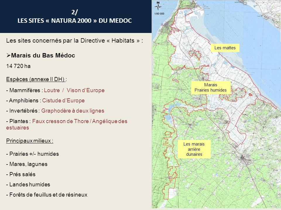 Les sites concernés par la Directive « Habitats » : Marais du Haut Médoc 5000 ha Espèces (annexe II DH) : - Mammifères : Loutre / Vison dEurope - Amphibiens : Cistude dEurope - Poissons : Grande alose - Plantes : Angélique des estuaires Principaux milieux : - Prairies +/- humides - Forêts alluviales - Forêts de feuillus Palu de Condissas Palu de By Palu de la Grêle Marais de St-Yzans-de- Médoc/Ordonnac Marais de Reysson Marais de Lafite Marais de Beychevelle Marais dArcins/Soussans Marais de Labarde 2/ LES SITES « NATURA 2000 » DU MEDOC