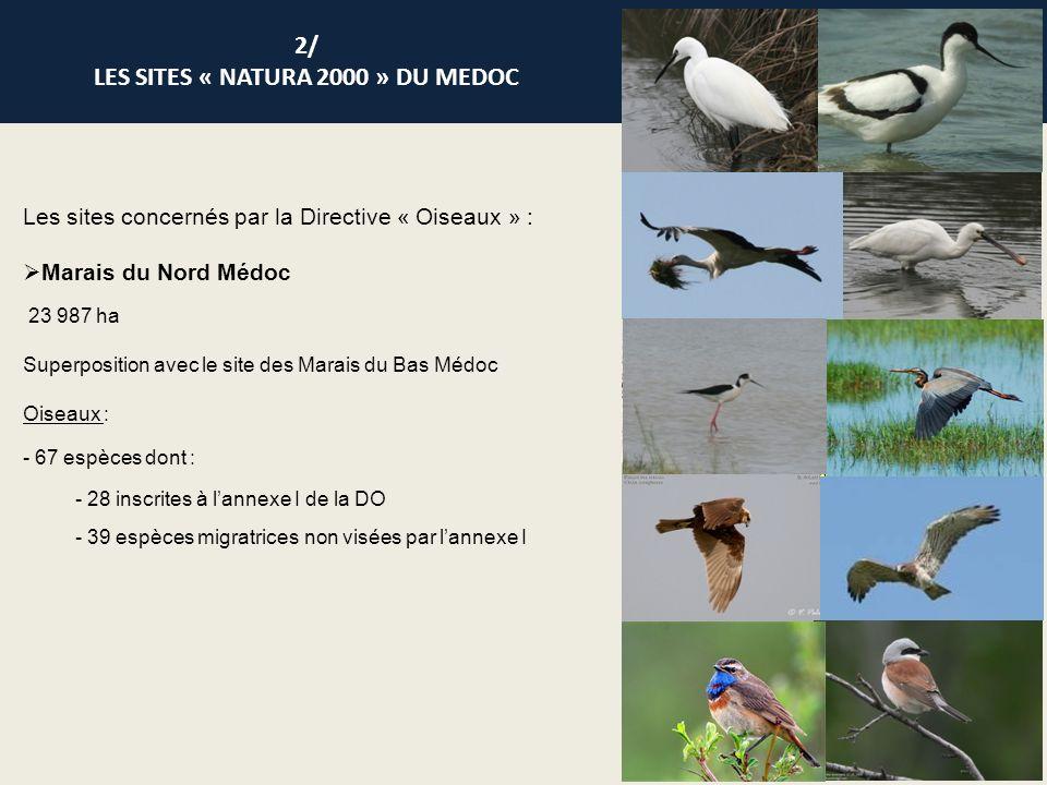 Les sites concernés par la Directive « Oiseaux » : Marais du Nord Médoc 23 987 ha Superposition avec le site des Marais du Bas Médoc Oiseaux : - 67 es