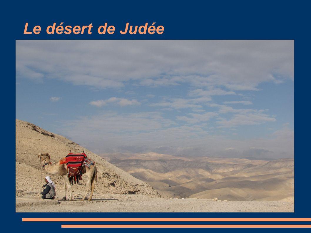 Le désert de Judée