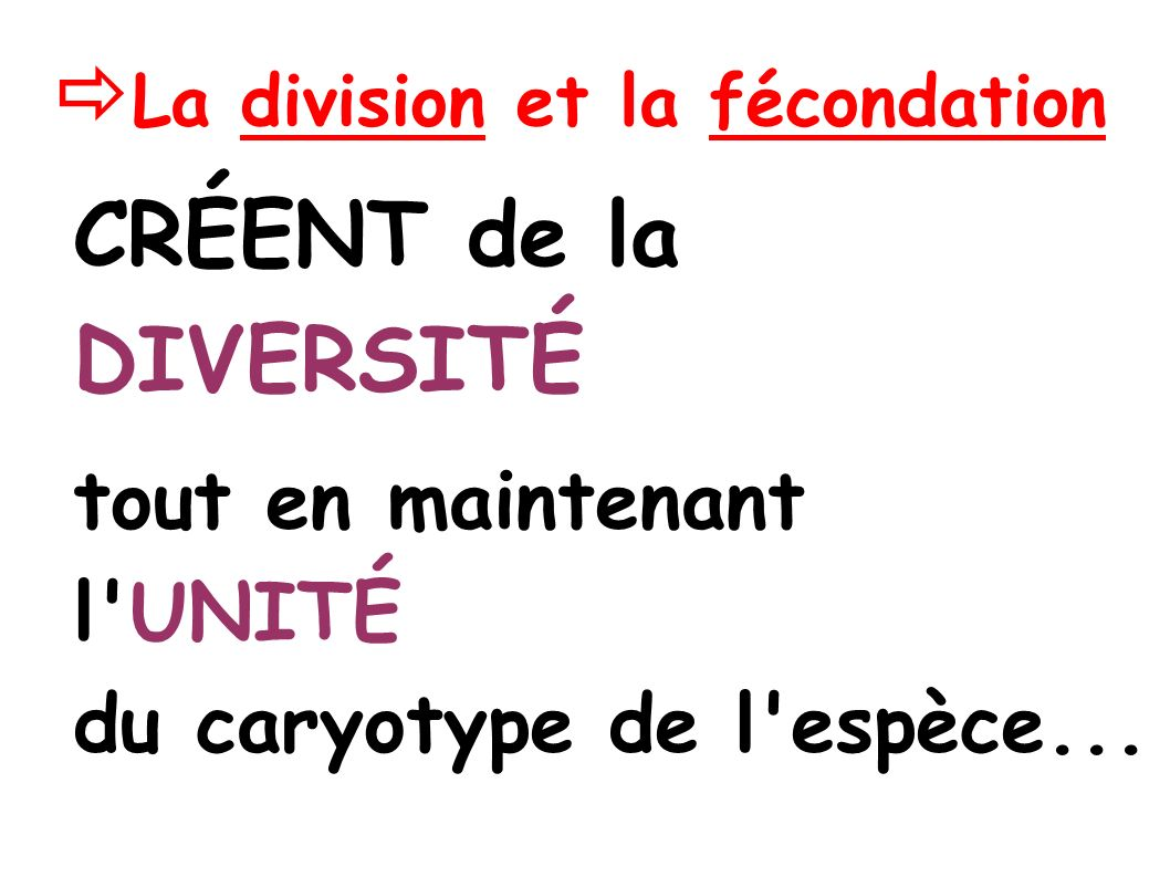 La division et la fécondation CRÉENT de la DIVERSITÉ tout en maintenant l UNITÉ du caryotype de l espèce...