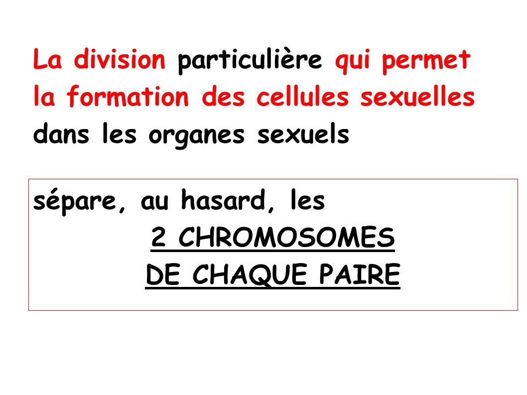 Ainsi, cette division qui permet la formation des cellules sexuelles CRÉE des CELLULES REPRODUCTRICES à 23 chromosomes qui sont GÉNÉTIQUEMENT DIFFÉRENTES