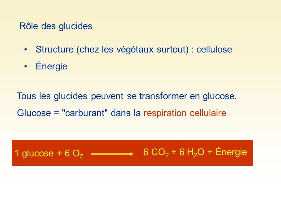 Rôle des glucides Structure (chez les végétaux surtout) : cellulose Énergie Tous les glucides peuvent se transformer en glucose. Glucose =
