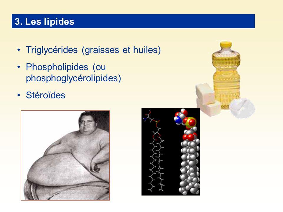 3. Les lipides Triglycérides (graisses et huiles) Phospholipides (ou phosphoglycérolipides) Stéroïdes