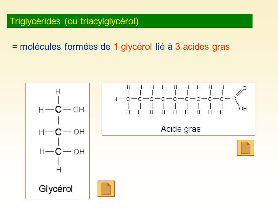 Triglycérides (ou triacylglycérol) = molécules formées de 1 glycérol lié à 3 acides gras