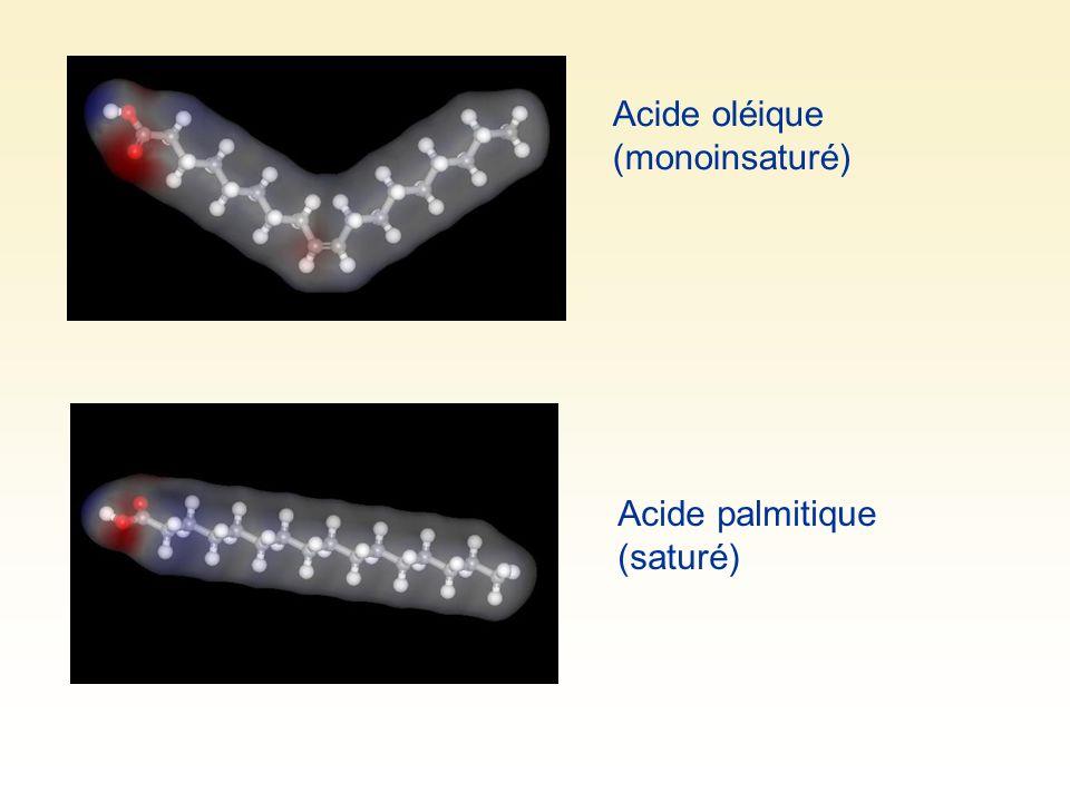 Acide oléique (monoinsaturé) Acide palmitique (saturé)