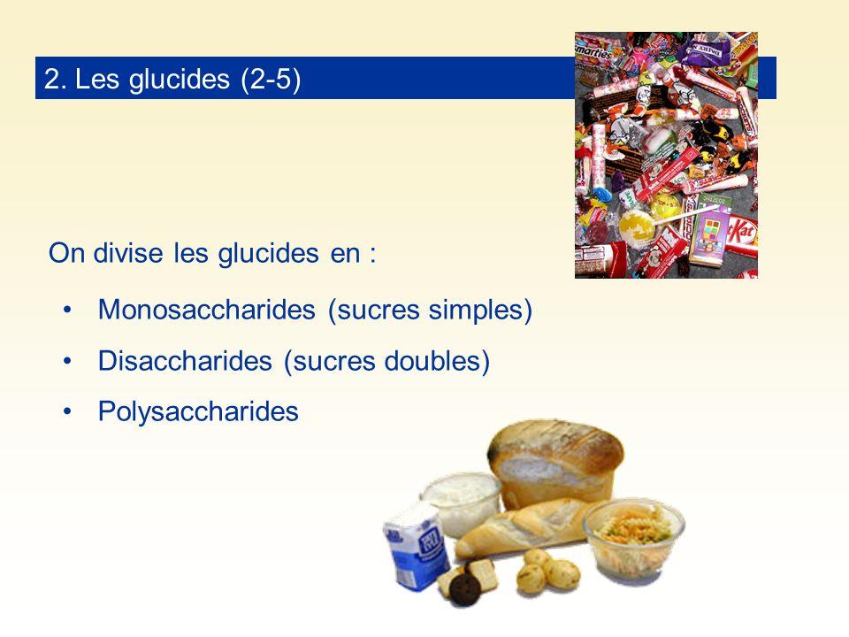 2. Les glucides (2-5) On divise les glucides en : Monosaccharides (sucres simples) Disaccharides (sucres doubles) Polysaccharides