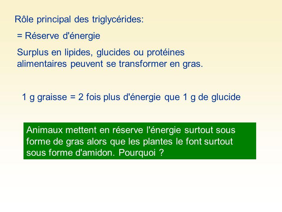 Rôle principal des triglycérides: = Réserve d'énergie 1 g graisse = 2 fois plus d'énergie que 1 g de glucide Surplus en lipides, glucides ou protéines