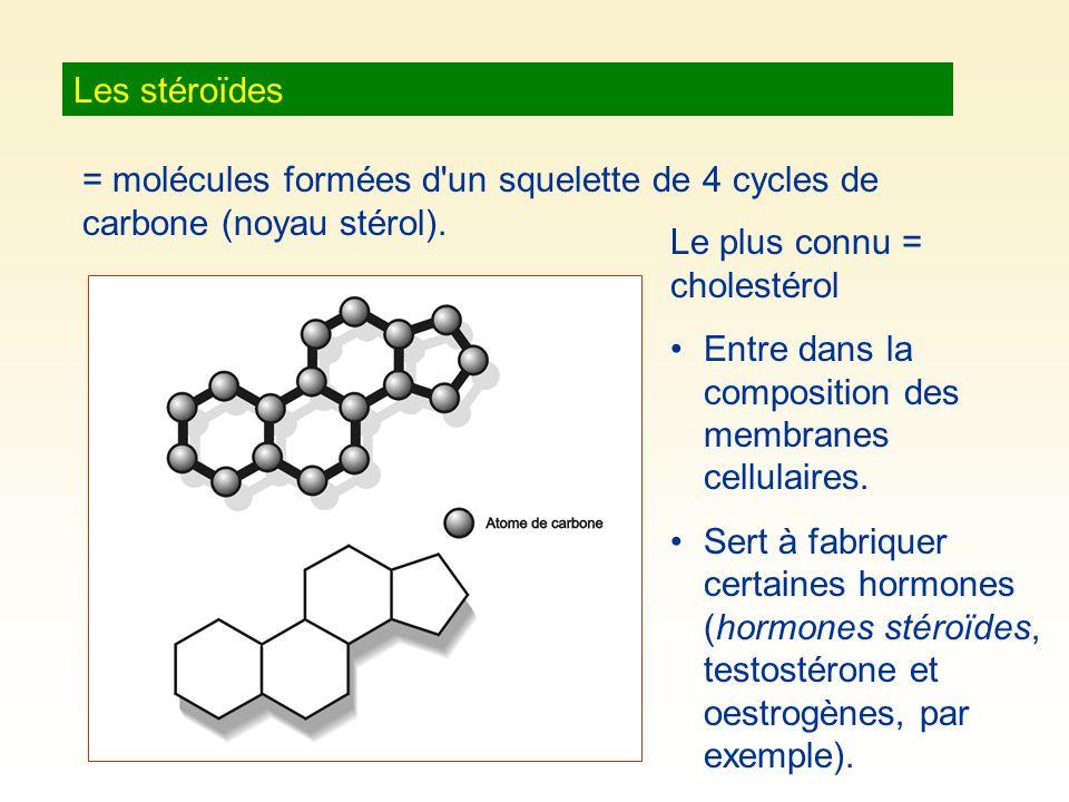 Les stéroïdes = molécules formées d'un squelette de 4 cycles de carbone (noyau stérol). Le plus connu = cholestérol Entre dans la composition des memb