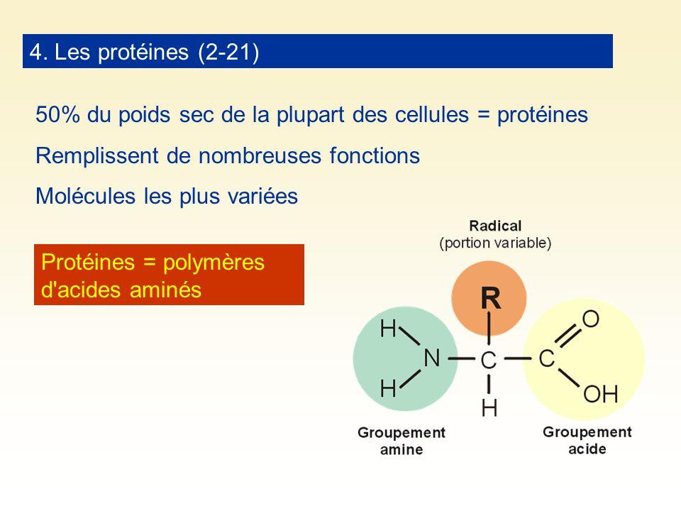4. Les protéines (2-21) 50% du poids sec de la plupart des cellules = protéines Remplissent de nombreuses fonctions Molécules les plus variées Protéin
