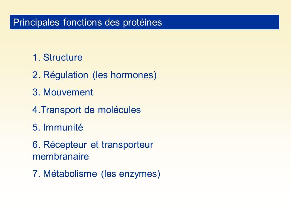 Principales fonctions des protéines 1. Structure 2. Régulation (les hormones) 3. Mouvement 4.Transport de molécules 5. Immunité 6. Récepteur et transp