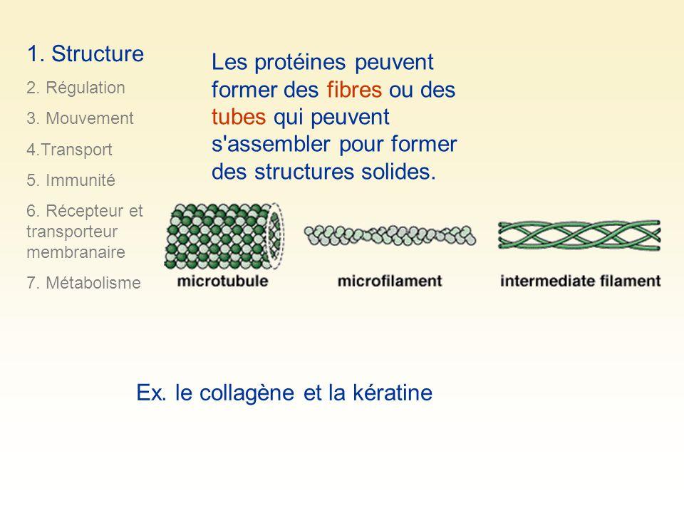 Les protéines peuvent former des fibres ou des tubes qui peuvent s'assembler pour former des structures solides. Ex. le collagène et la kératine 1. St
