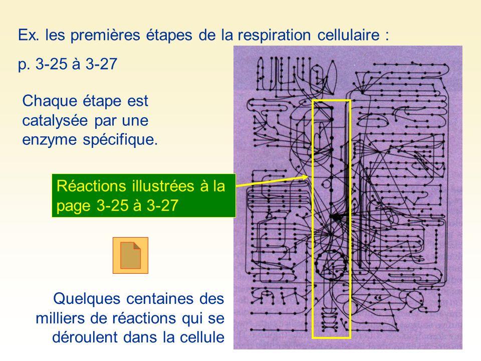 Quelques centaines des milliers de réactions qui se déroulent dans la cellule Ex. les premières étapes de la respiration cellulaire : p. 3-25 à 3-27 C