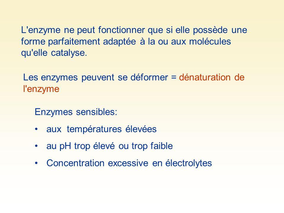 L'enzyme ne peut fonctionner que si elle possède une forme parfaitement adaptée à la ou aux molécules qu'elle catalyse. Les enzymes peuvent se déforme
