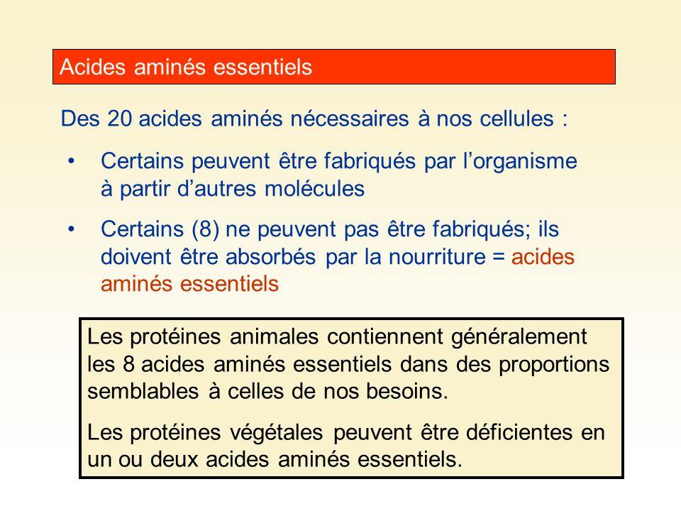 Acides aminés essentiels Des 20 acides aminés nécessaires à nos cellules : Certains peuvent être fabriqués par lorganisme à partir dautres molécules C