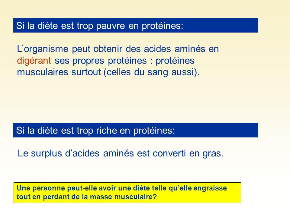 Si la diète est trop pauvre en protéines: Si la diète est trop riche en protéines: Lorganisme peut obtenir des acides aminés en digérant ses propres p