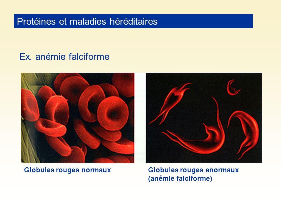 Protéines et maladies héréditaires Ex. anémie falciforme Globules rouges normauxGlobules rouges anormaux (anémie falciforme)