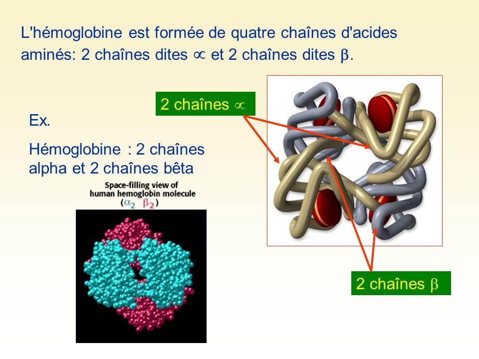 L'hémoglobine est formée de quatre chaînes d'acides aminés: 2 chaînes dites et 2 chaînes dites. Ex. Hémoglobine : 2 chaînes alpha et 2 chaînes bêta 2