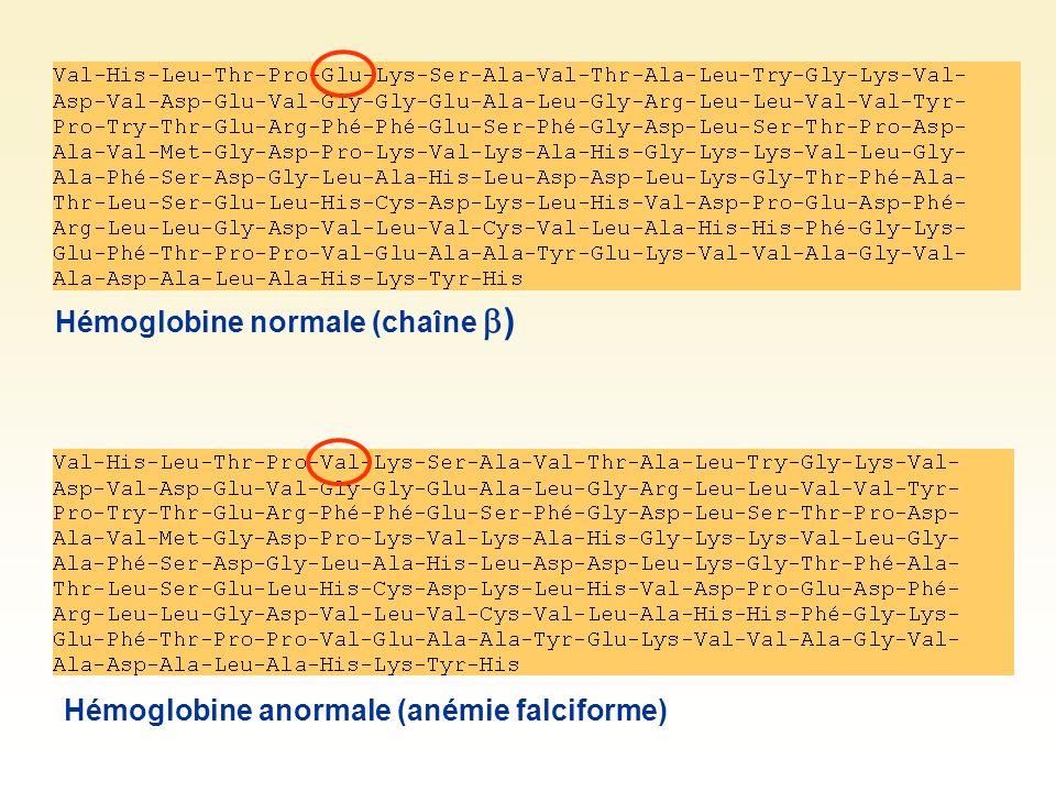 Hémoglobine normale (chaîne ) Hémoglobine anormale (anémie falciforme)