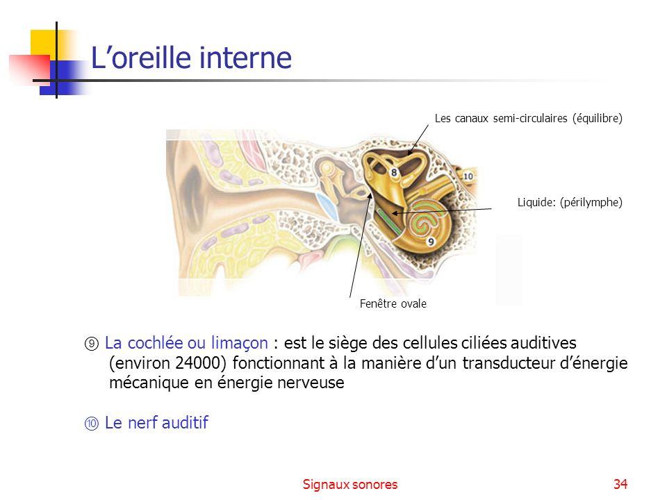 Signaux sonores34 La cochlée ou limaçon : est le siège des cellules ciliées auditives (environ 24000) fonctionnant à la manière dun transducteur déner