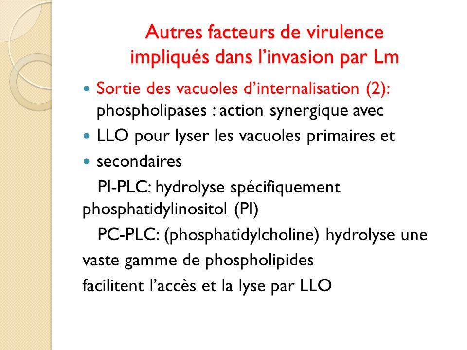 Autres facteurs de virulence impliqués dans linvasion par Lm Sortie des vacuoles dinternalisation (2): phospholipases : action synergique avec LLO pou