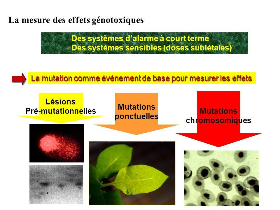 La mutation comme événement de base pour mesurer les effets Des systèmes dalarme à court terme Des systèmes sensibles (doses sublétales) La mesure des