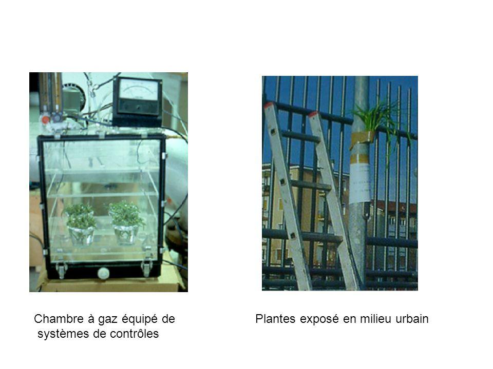 Chambre à gaz équipé de systèmes de contrôles Plantes exposé en milieu urbain