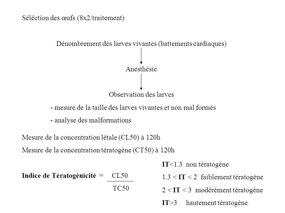 Séléction des œufs (8x2/traitement) Dénombrement des larves vivantes (battements cardiaques) Anesthésie Observation des larves - mesure de la taille d