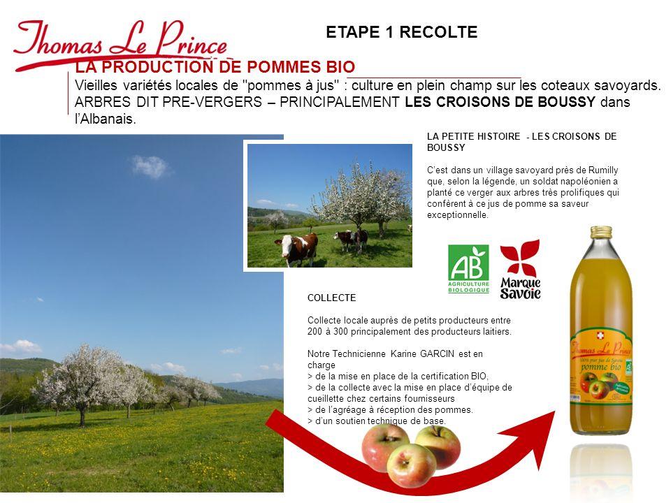 LA PRODUCTION DE POMMES BIO Vieilles variétés locales de pommes à jus : culture en plein champ sur les coteaux savoyards.