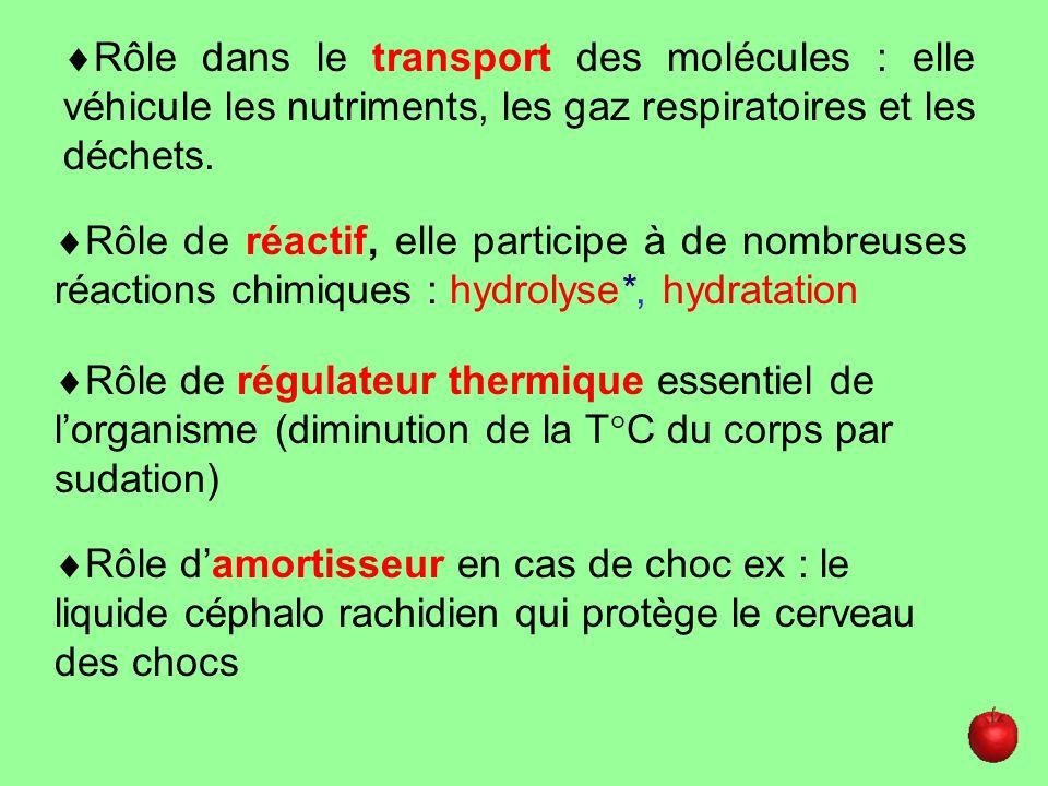 Rôle dans le transport des molécules : elle véhicule les nutriments, les gaz respiratoires et les déchets. Rôle de réactif, elle participe à de nombre