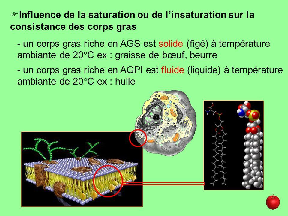 Influence de la saturation ou de linsaturation sur la consistance des corps gras - un corps gras riche en AGS est solide (figé) à température ambiante