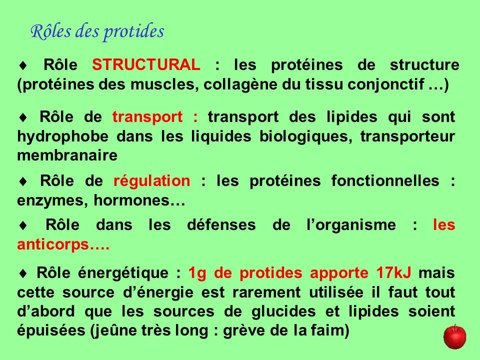 Rôle STRUCTURAL : les protéines de structure (protéines des muscles, collagène du tissu conjonctif …) Rôles des protides Rôle de transport : transport