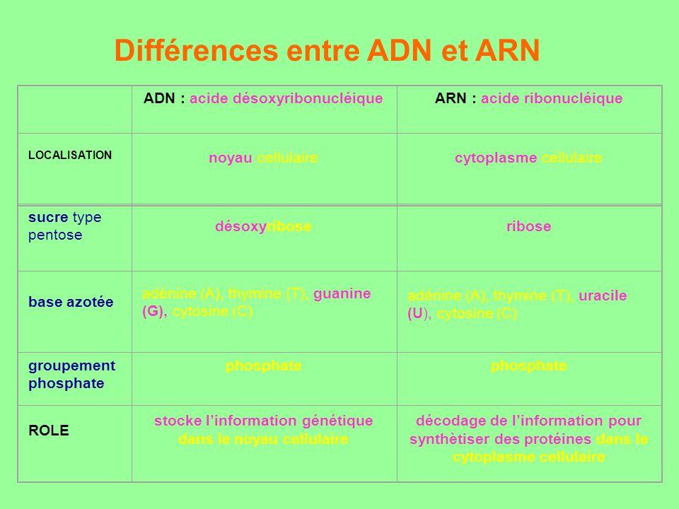 Différences entre ADN et ARN ADN : acide désoxyribonucléiqueARN : acide ribonucléique LOCALISATION noyau cellulaire cytoplasme cellulaire sucre type p